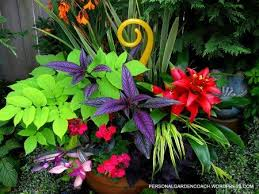 Plant Combination Ideas For Container Gardens 23 Best Color Combinations Images On Pinterest Color