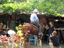 thanksgiving horse pictures another thanksgiving u2013amazing costa rica dog lover