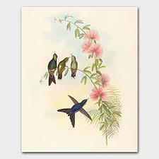 Amazon Hummingbird Print Bird Art Gould Artwork Home Wall