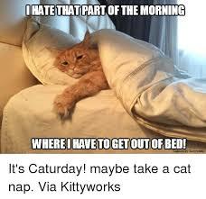 Internet Meme Cat - 25 best memes about cat nap cat nap memes