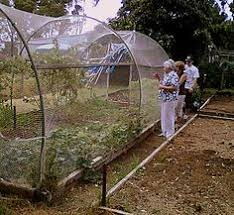 net greenhouse protects vegetable gardens and young plants from