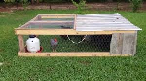 Backyard Chicken Tractor by Chicken Tractor Update How Grass Is Affected Youtube