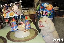 Stoned Dog Meme - birthday dog turns two weknowmemes