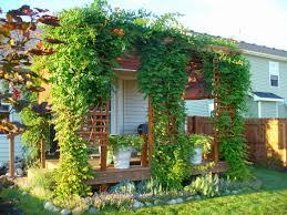 reader photos sarah u0027s garden in illinois day 2 the back yard