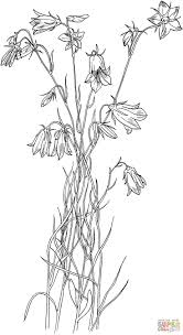 flower for garden coloring pages printable creativemove me