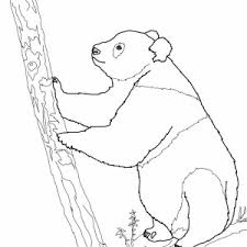 giant panda try to climb tree coloring page giant panda try to