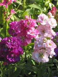 redwood barn nursery september plan for winter fragrance