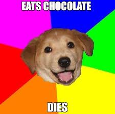 Chocolate Meme - eats chocolate dies meme advice dog 65673 memeshappen