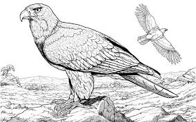 realistic animal coloring pages realistic eagle coloring pages coloring page for kids kids coloring