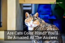 Are Dogs And Cats Color Blind Are Cats Color Blind Wwwgalleryhipcom The Hippest Pics Cats And