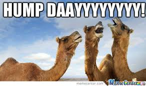 Hump Day Camel Meme - happy hump day happiness pinterest