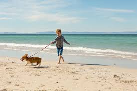 the pros and cons of dog walking jobs for kids