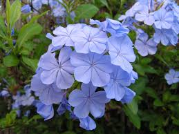 light blue flowers light blue flower by anastasia0512 on deviantart