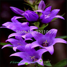 canula seeds canada best selling canula seeds from top