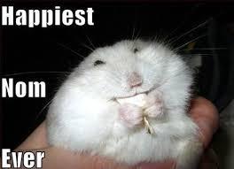 Nom Nom Nom Meme - 12 best om nom nom images on pinterest adorable animals funny