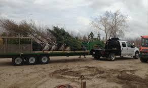 wholesale heidrich s colorado tree farm nursery