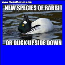 Silly Rabbit Meme - cleanmemes cleanfunnyimages www cleanmemes com clean memes