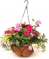 Hanging Flowers Hanging Flower Baskets Hanging Plants And Planters