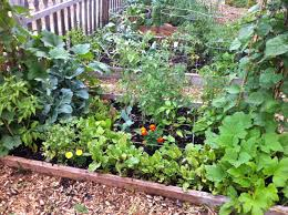 community garden layout alfa img showing u003e community garden plot design community garden