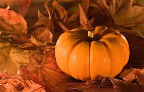 thanksgiving pumpkin pictures photos and images for