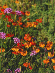 flower colors by season choosing colors for your garden hgtv