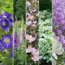 fleurs vivaces rustiques kit de vivaces jardin de curé plantes et jardins