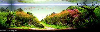 Java Moss Aquascape Java Moss Care European Aquascape Channel