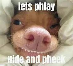 Tuna The Dog Meme - phteven phteven meme dump decentme me