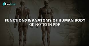 Human Physiology And Anatomy Pdf Functions And Anatomy Of Human Body Gk Notes In Pdf Testbook Blog