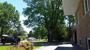 the worst arborist chainsaw tree cutting major fail