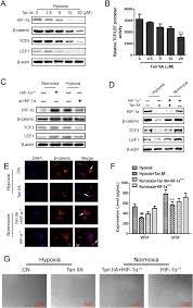 3f si e social tanshinone iia inhibits β catenin vegf mediated angiogenesis by