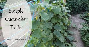 Trellis For Cucumbers In Pots Diy Friday Simple Cucumber Trellis Cucumber Trellis And Gardens