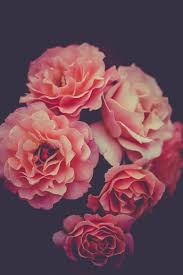 flowers images free images on unsplash