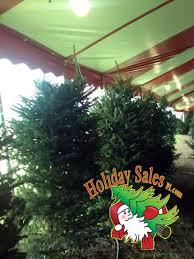 www christmastreesfl com christmas trees miami
