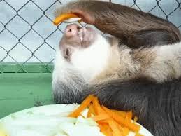 Sloth Meme Generator - sloth meme generator animals giff 4121 funny sloth giffs funny