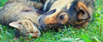 veterinarians in everett ma vca everett animal hospital