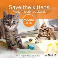 Baby Shower Venues In Los Angeles County Kittens Los Angeles Nkla