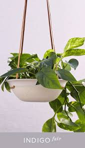 plante d駱olluante chambre plante interieure fleurie pour robe de chambre grande taille