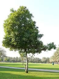 tree texture 0119 texturelib