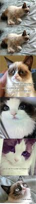 Grumpy Cat Sleep Meme - grumpy cat memes best collection of funny grumpy cat pictures