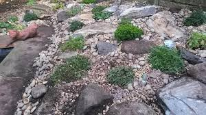 Alpine Rock Garden by Overgrown Border Becomes A Miniature Alpine Landscape Teddington