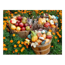 fruit and vegetable baskets fruits vegetables gifts on zazzle