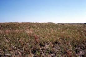 native plants in alberta a wandering botanist the range of prairie plants natives of