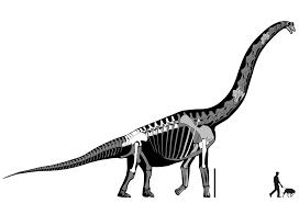 brachiosaurus humerus search results sauropod vertebra picture