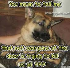 German Shepherd Memes - funny german shepherd meme for dog lovers click here to check out