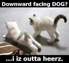 Dog Cat Meme - downward facing dog cat yoga on we heart it