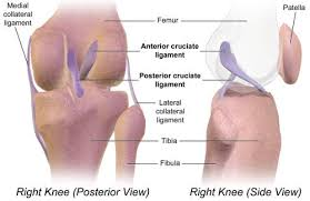 Right Knee Anatomy Why Your Turned Out Duck Feet Are Trashing Your Body