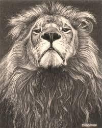 15 lions images