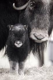 Backyard Animals Lyrics 50 Best Beautiful Images On Pinterest Baby Animals Fields Of