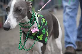 40 photos that prove st patrick u0027s day in dogtown is the best